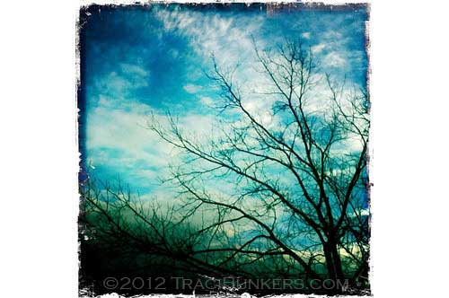 TraciBunkers.com-hipstamatictrees